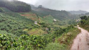 Coffee Quality and Sustainability