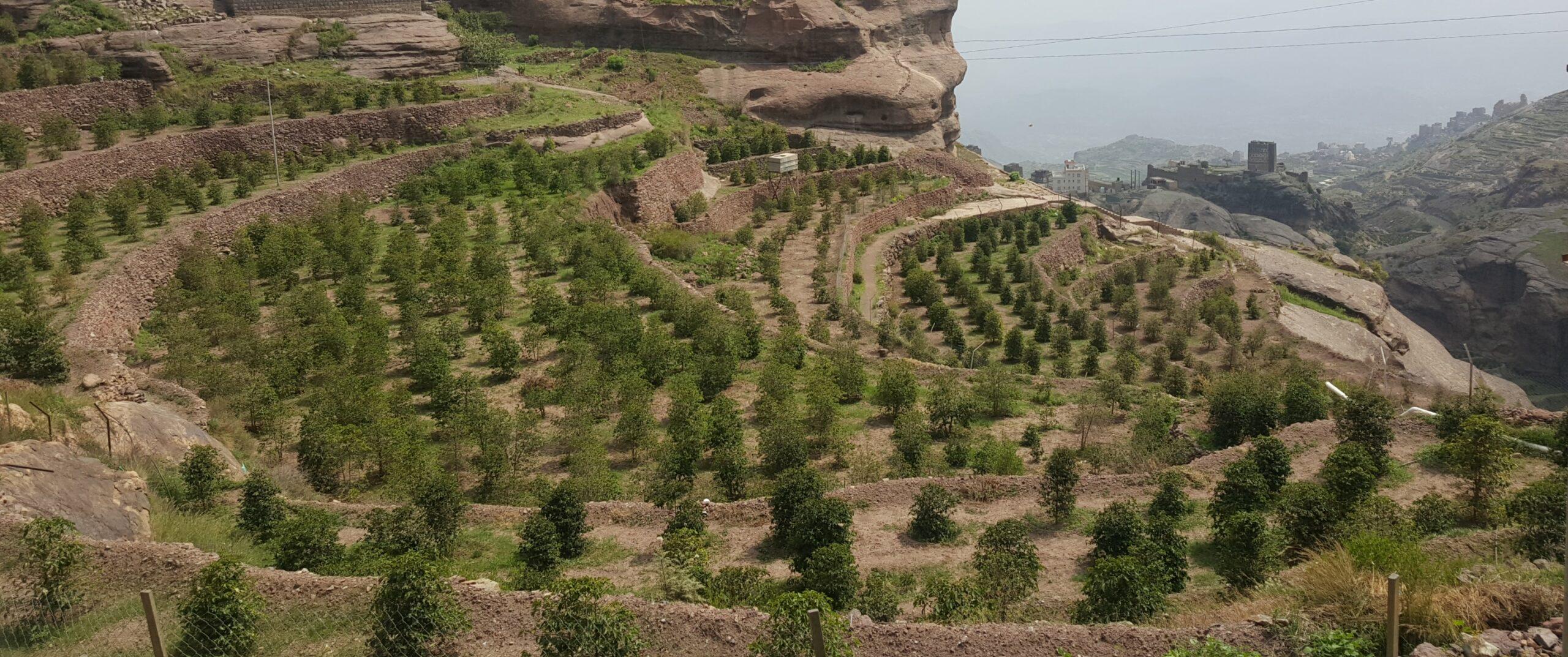 Yemen Haraz Coffee