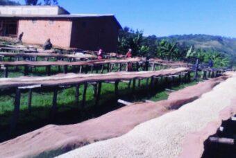 Burundi Izere coffee